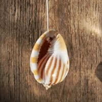 Striped Bonnet Shell Light Pull | Decorative Light Pull | Light Pull Switch